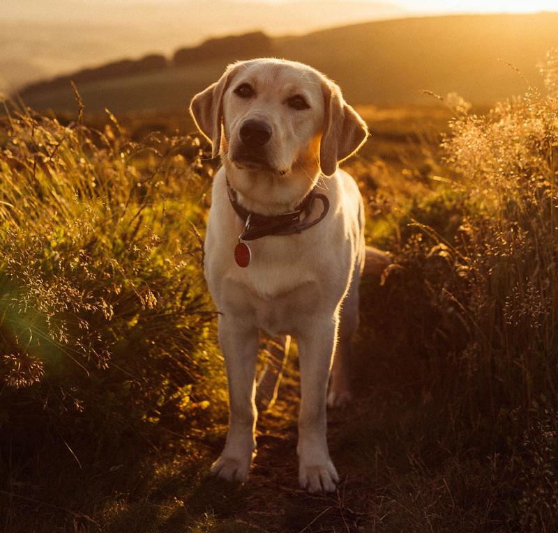 quitchfidele-hunde-dog-in-field